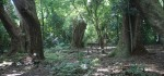 Wanasadi, Keangkeran Hutan Persemayaman Jin Gadung Melati